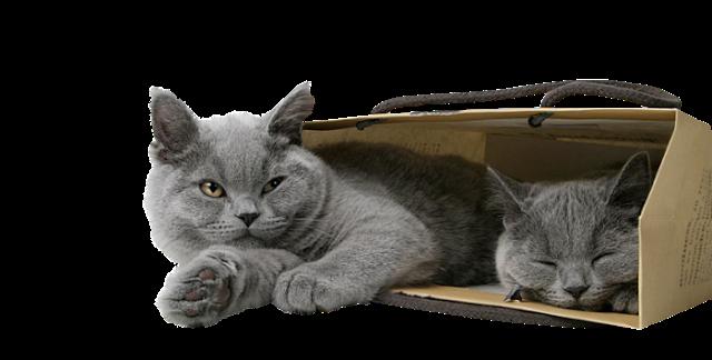 tube de gato gris