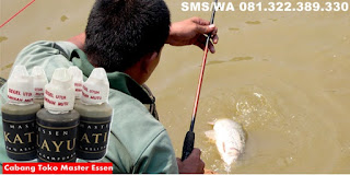 Umpan Untuk Ikan Mas Harian Master Essen Katilayu