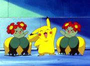 Pikachu con  Bellossom