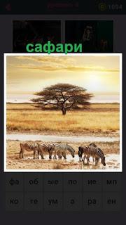 сафари с деревом и животными бродящими по пустыне