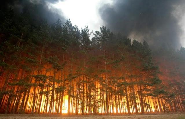 Пожар в Чернобыльской зоне: Огонь приблизился к Припяти и хранилищу радиоактивных отходов