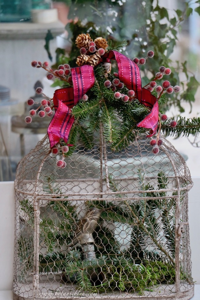 Refresh dried out greenery on the Christmas red plaid berry birdcage with fresh sprigs cut from a small tree kept outside