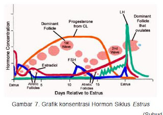 Grafik konsentrasi Hormon Siklus Estrus