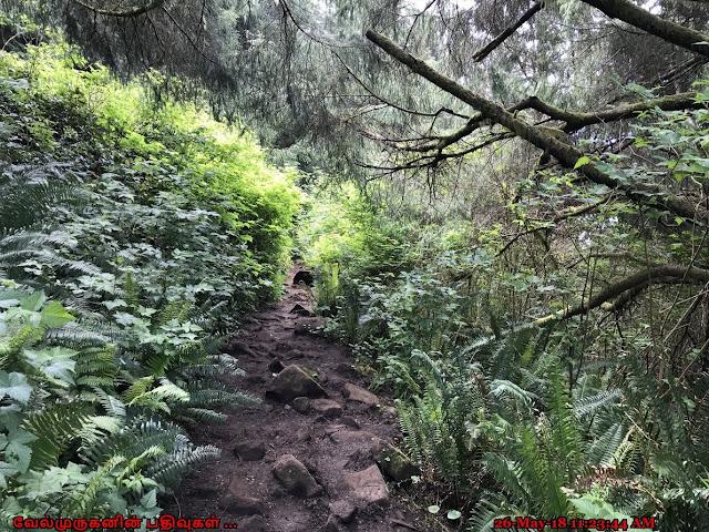 Mount Neahkahnie Hike Oregon