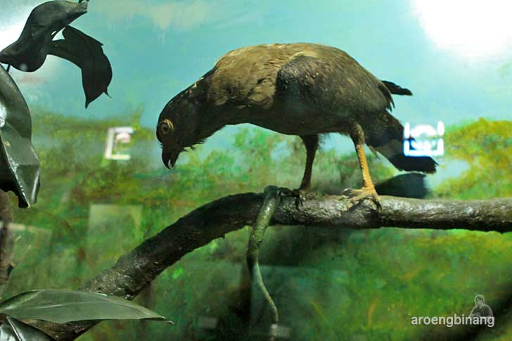 bido museum zoologi bogor