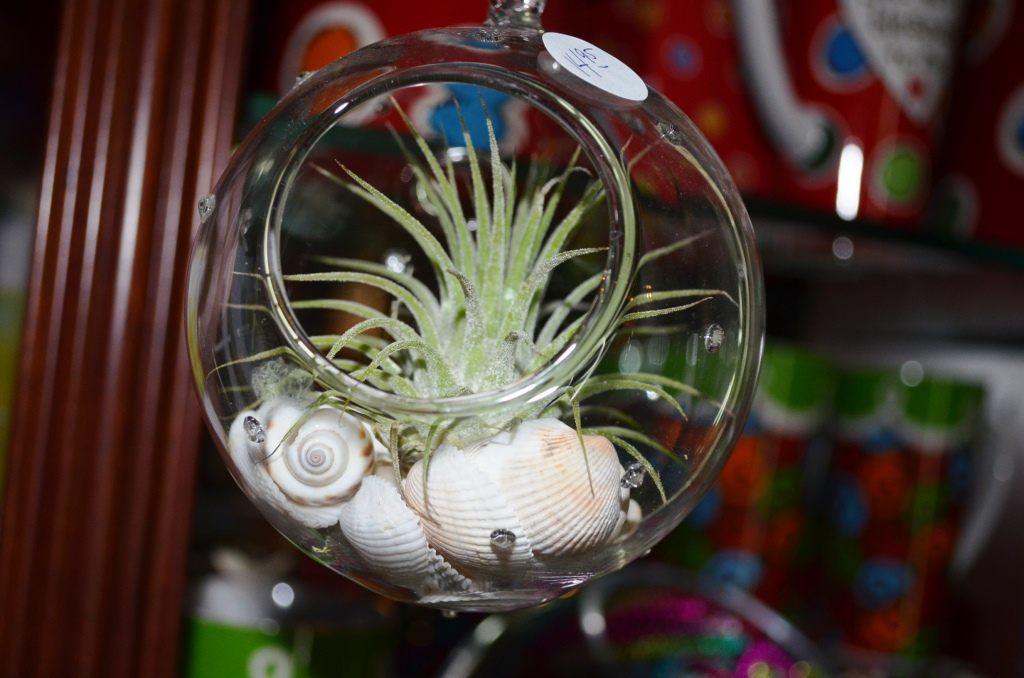 If You Have A Little More Room To Dedicate, Why Not Have Us Make You A  Larger Terrarium With Multiple Air Plants? Clear Gems, Natural River  Stones, Moss, ...