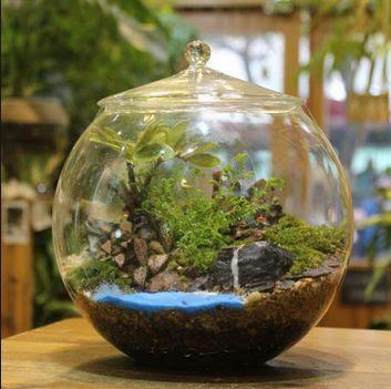 Model Aquarium Bulet