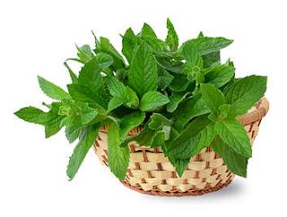 daun mint dapat mengobati dan mencegah urticaria