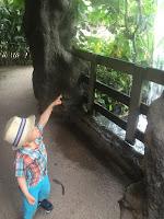La ferme aux crocodiles, fontaine