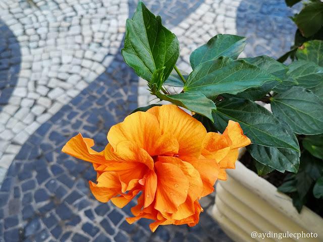 Flower on the Sidewalk