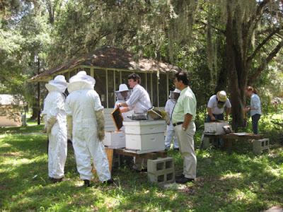 Δωρεαν μαθηματα μελισσοκομιας στην Κερατεα Αττικης