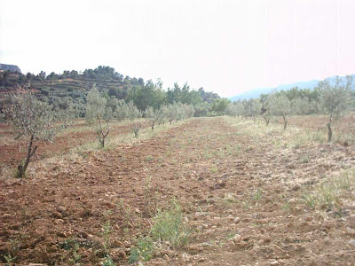 La pileta, camino, pantano de Pena, embalse, finca, almendros, olivos 3