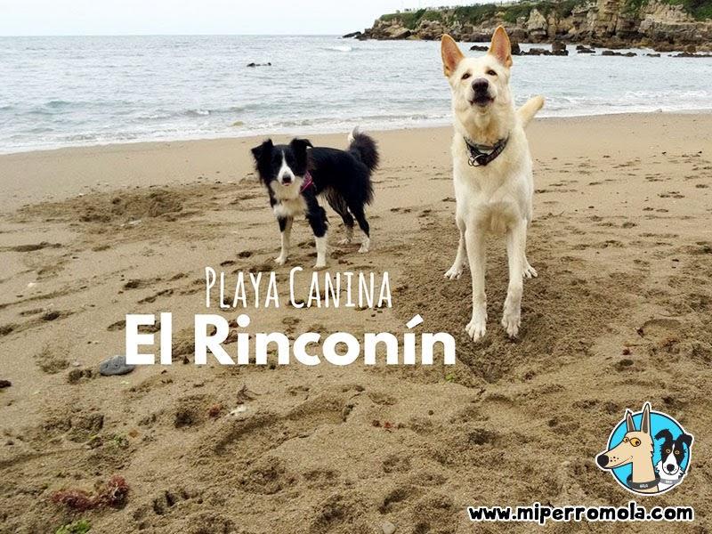 Can de Palleiro y Border Collie en el Rinconín la Playa Canina de Gijón