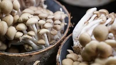 Mushroom farming training centre