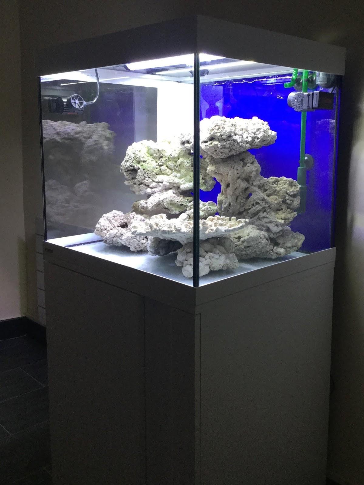 Aquarium Eau De Mer Fish Only : aquarium, Aquarium, Only:, Réalisation, Décor