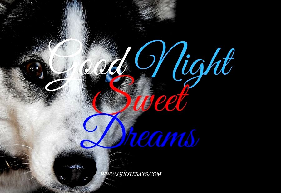Good Night Husky Dog with Blue and Brown Eyes