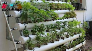 Usaha pertanian Hidroponik