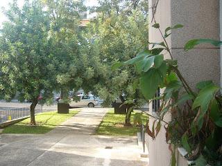 http://www.inmosevilla.net/2015/10/en-venta-apartamento-de-1-dormitorio-en.html