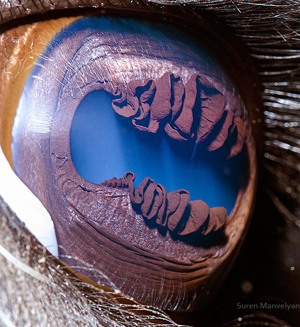 check out Extreme Close-Ups of Animal Eyes