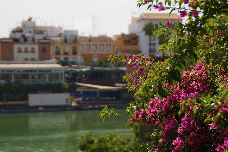 Blumen in Sevilla, Spanien | Sevilla im Sommer bereisen: heiß, sonnig, nicht zu touristisch und wunderschön!