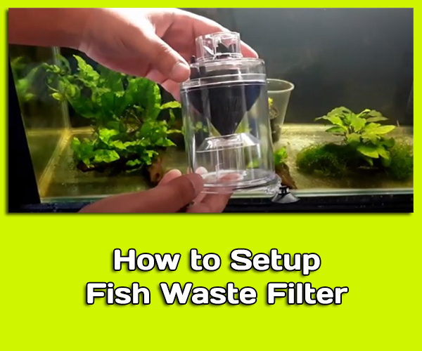 How to Setup Fish Waste Filter