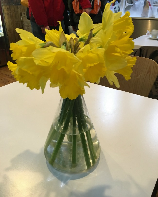 using-flowers-in-your-home-daffodils-in-clear-glass-vase
