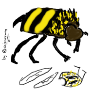 Bos2 aka DungBeetle (by sciencemug)