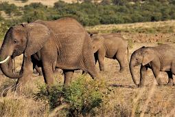 Uttarakhand: Elephants herd block railway track and 2 killed in train-hit