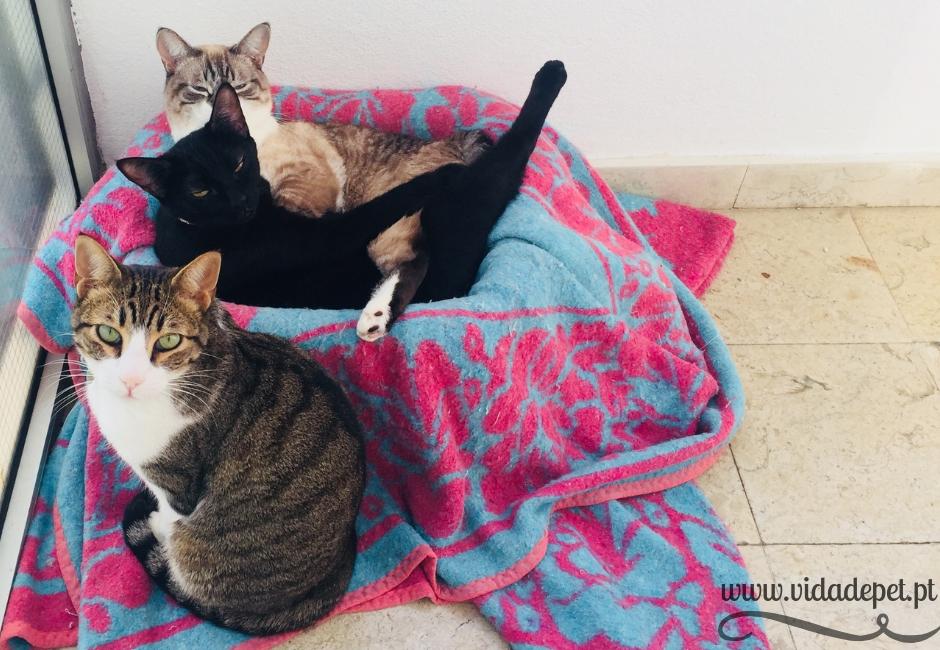 A coriza nos olhos felinos cura-se + gatos bebés + cura de doença comum+ blogue de animais de estimação + portugal + português + vida de pet + pedro e telma + partilha de histórias reais