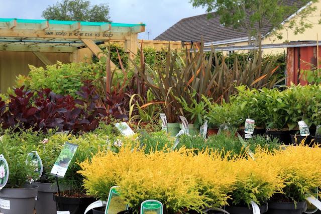 Outdoor plants at Solas