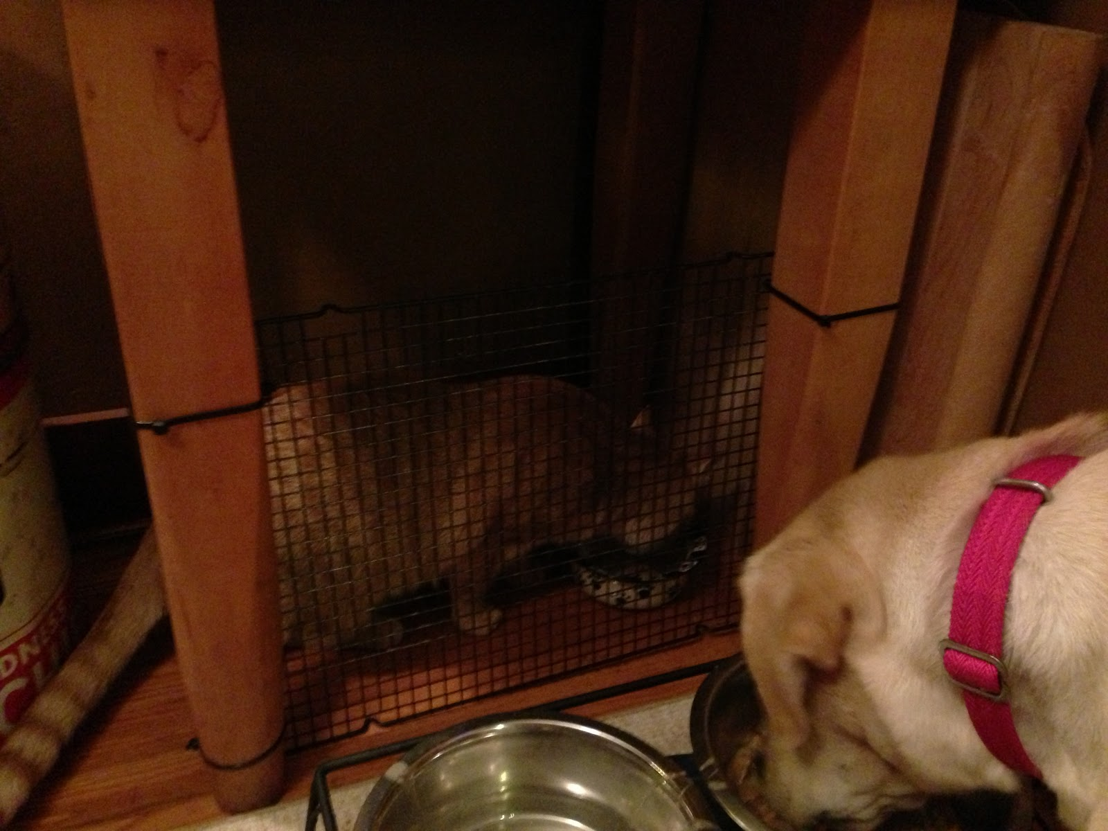 Tales From A Sears House Dog Proof Cat Feeding Station