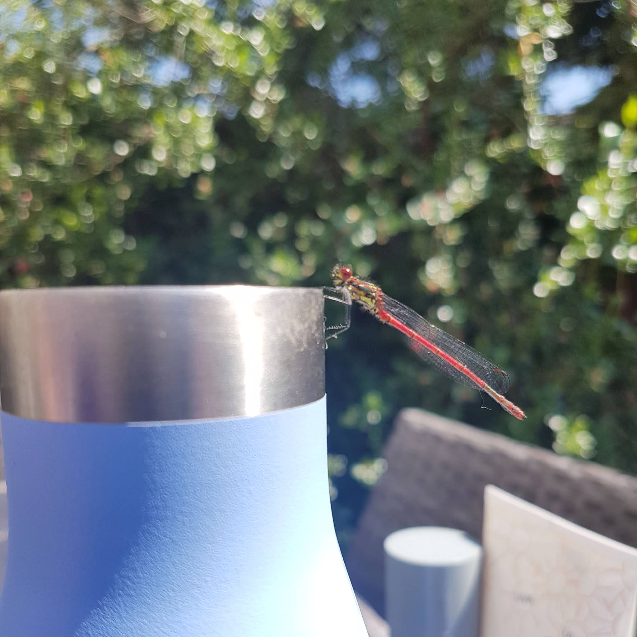 light blue reusable water bottle with a red dragon fly on the edge