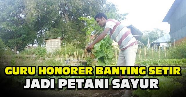 Gaji Tak Cukup Buat Kebutuhan, Guru Honorer Ini Banting Setir Jadi Petani Sayur, Omzetnya Bisa Rp 7 Juta Sebulan