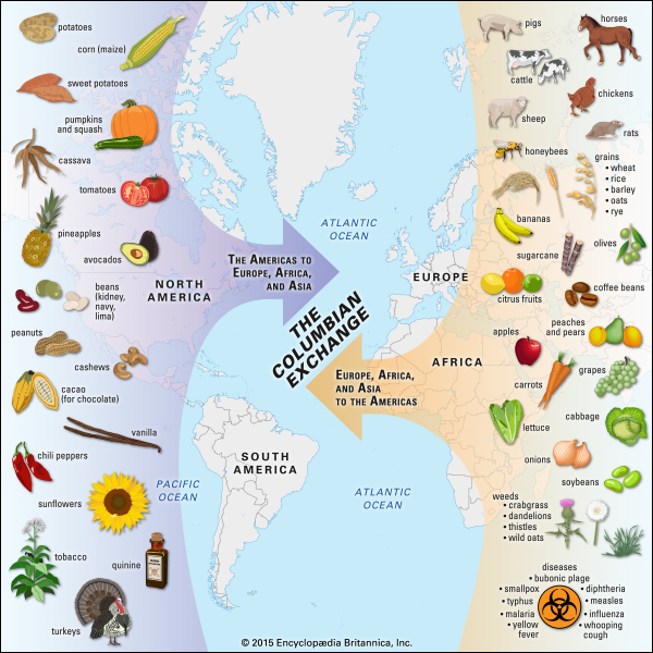 Which Food Plant Was Native To The New World Answers