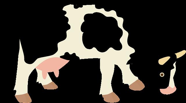 Budidaya peternakan sapi perah