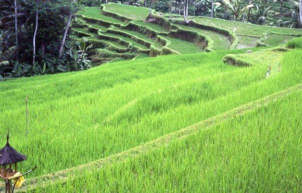 Temukan Pengertian Pengertian Ekosistem Buatan