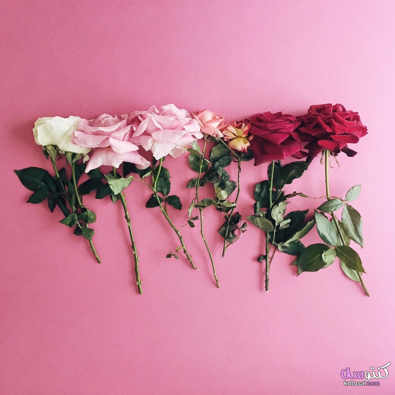 احلى صور ورود 2020 جوده عالية صور زهور منوعة اجمل صور ورد