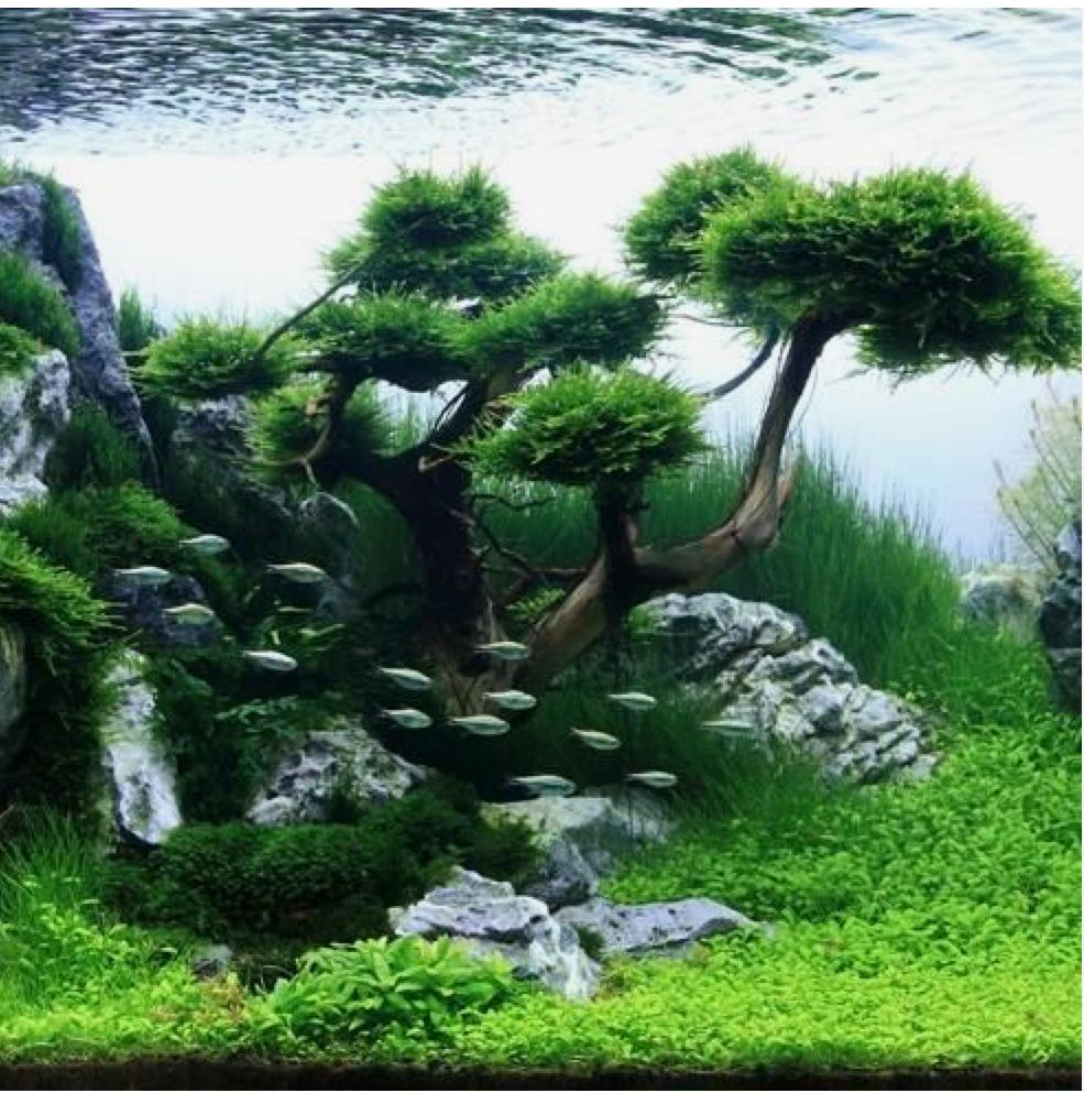 hồ thủy sinh mini vẫn tạo được khung cảnh thiên nhiên hùng vĩ