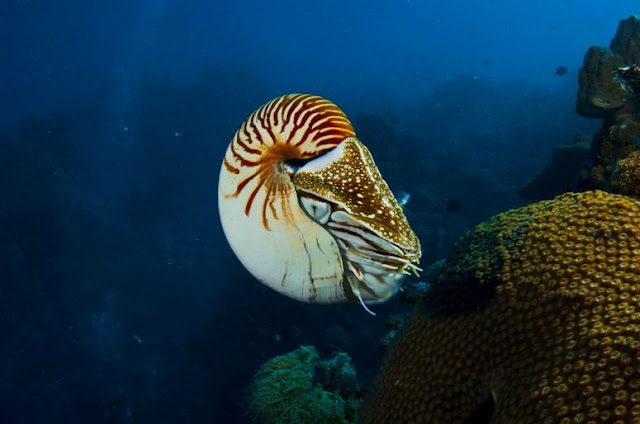 Underwater sea creatures and other animals Wallpapers   SEA LIFE Adventure Backgrounds