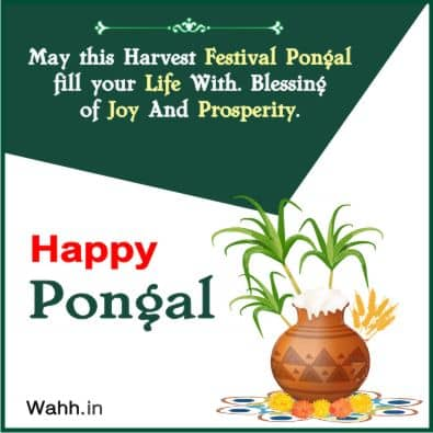 pongal dish quotes