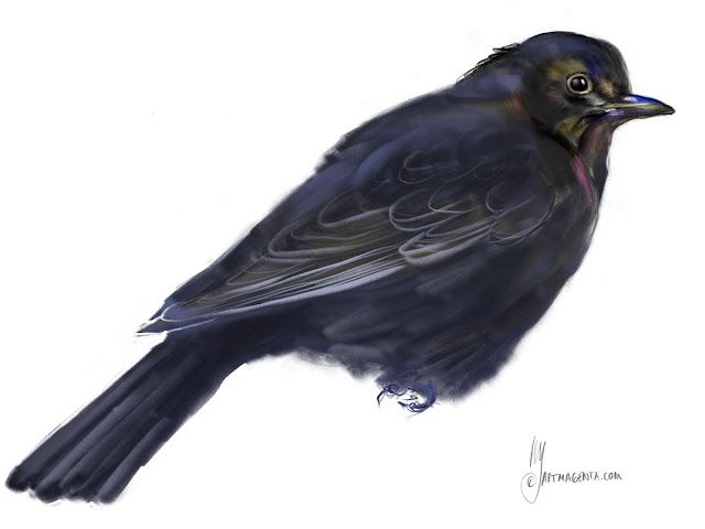 Eurasian Blackbird Birsd painting by Artmagenta