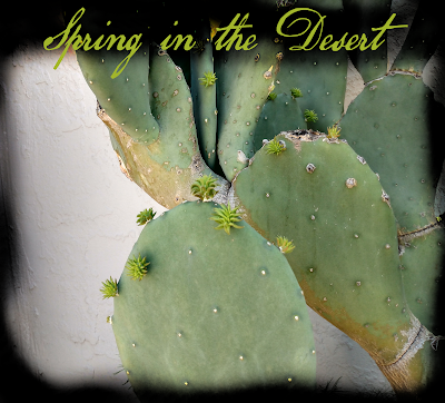 prickly pear cactus in spring desert