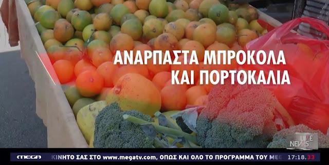 Ανάρπαστα πορτοκάλια και μπρόκολα στις λαϊκές αγορές (βίντεο)