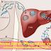 Protozoa Darah (Plasmodium vivax) (Laporan Pengamatan Praktikum) - Seri Edukasi Teknologi Laboratorium Medik