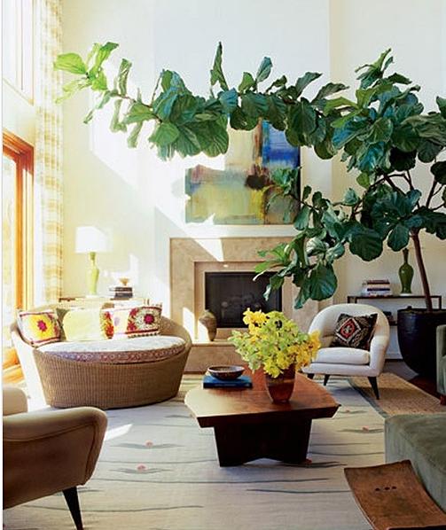 Exotic Home Decor: Decor Trend: Exotic Home Plants