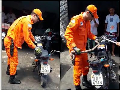 Mecânico encontra jiboia embaixo de cela de moto durante conserto, em Parnaíba; VÍDEO