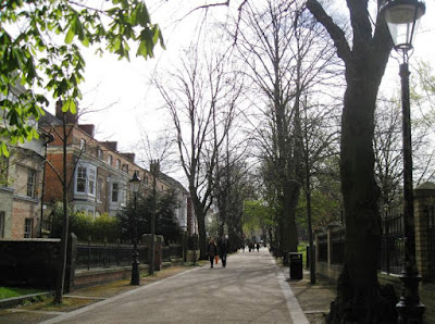 Tree-lined pedestrian pathway