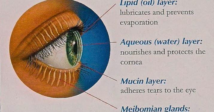 Omong Mak Long Nota Penyakit Kering Mata Blepharitis