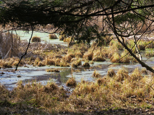 small wetland with hummocks