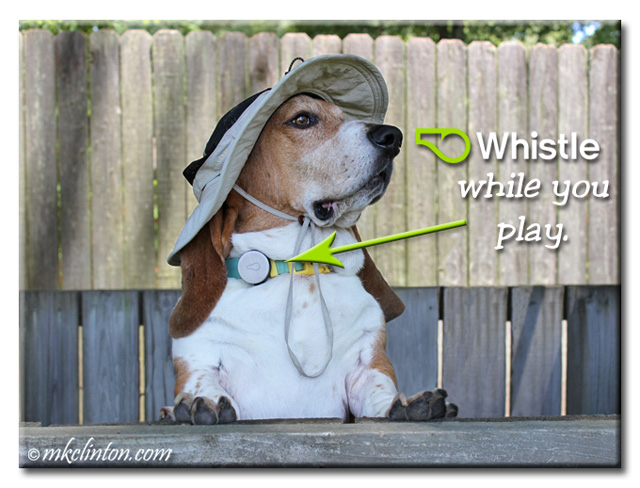 "Bentley Basset Hound wearing a Whistle Activity monitor with meme ""Whistle While You Play"""